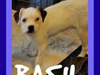 BASIL's story Please contact Jenny Cope