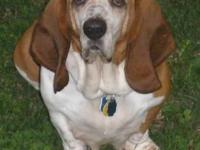 Basset Hound - Ethel - Medium - Senior - Female - Dog
