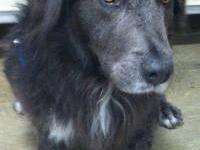 Basset Hound - Hedwig - Medium - Adult - Male - Dog