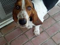 I have two bassets needing new homes. Both up to date
