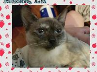 Bastet's story Bastet is looking for a patient, loving