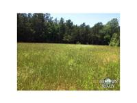 Access - Hangout Rd . Wood Stand - Pine plantation,