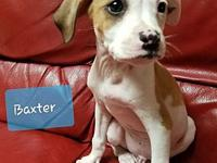 Baxter's story Here's Baxter...one of a litter of super