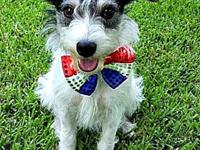 My story Baxter is a 3 year old Jack Russell Terrier