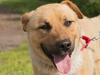 Baxxter's story Baxxter is a playful and outgoing
