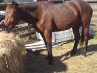 I have 4yrd old beautiful quarter horses(Sugas) for