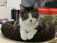 My story I came to Cat Depot from Animal Services. I am