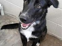 Bazi's story Bazi is an 8 month old Border Collie mix.