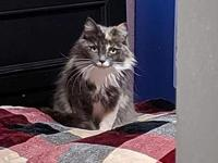 My story Bea 4 1/2 years old Dilute Torti Medium hair 6