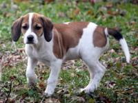 I have 2 beagle mix females.. I got them for my kids
