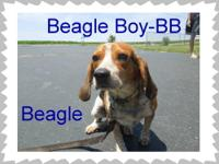 Beagle Boy (or as we call him BB) is a 3 year old