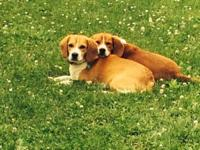We are needing to remove our two little Beagle bros. We