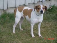 Beagle - Buffy-courtesy Lis - Medium - Adult - Female -