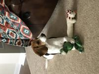 7 month old,  tri colored beagle for sale. Need