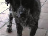 Beagle - Freckles - Medium - Young - Female - Dog