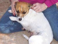 Beagle - Gretta - Referral - Small - Young - Female -