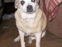 Beagle - Jesse - Small - Senior - Female - Dog How sad