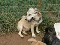 Beagle - Missy - Small - Adult - Female - Dog Missy is