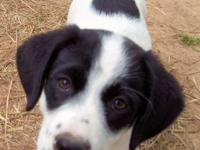 Cute female Beagle mix pup for adoption. Ollie is 11