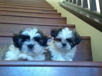 2 Beagle Boys up for Adoption Visit us at I have 2