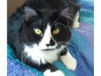 Beamer is a long furred black and white male. He came