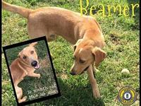 Beamer's story You can fill out an adoption application