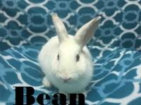 Bean is under a year old and is a very sweet, friendly,