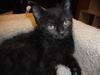 Bean's story Bean, DOB 05/04/18 is litter mates with