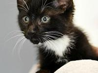 Beans's story Meow! My name is Beans. I am a black and