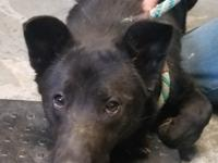 Bear is very sweet does great with other dogs and cats