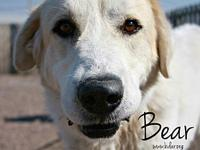 Bear's story If you are not viewing this adoption