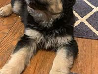 My story Bear is 10 weeks old and ready for his new