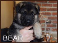 Bear is absolutely handsome. He is the tallest and