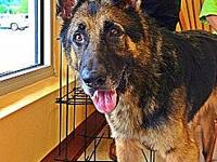 Bear's story Bear is a 7/8 year old GSD that has had a