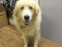 Bear's story 18-D08-038 Bear Breed: Great Pyrenees Mix