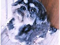 Bear's story Bear is a 7  8-year-old Shih Tzu who was