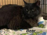 Bear's story Our pets are spayed/neutered and current