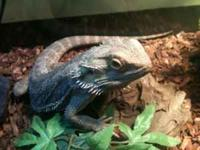 I have a 1 year old Bearded Dragon that i would like to
