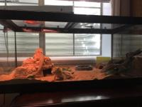 We love our bearded dragons. We are downsizing