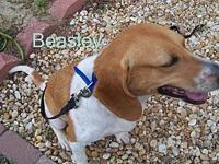 Beasley's story Beasley is about 4 years old and stands