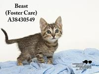 Beast (Foster Care)'s story All cats in the adoption