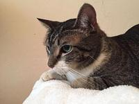 Beatrice's story Beatrice is an adult spayed female