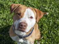This animal is available at the Napa County Shelter