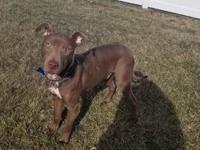 Meet sweet Beau! Beau is 9 months old, neutered and