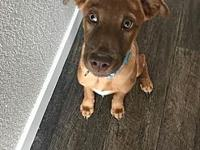 My story Beau is a 17 week old mix breed pup. He is a