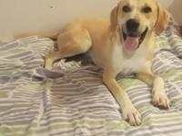 Beau is around 55lbs, good with kids and other dogs,