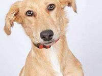 Beau's story Beau is a fun loving, social boy who loves