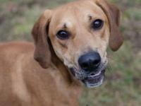 Beau's story This handsome guy is Beau. He came all the