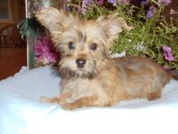Baxter has a super outgoing personality, loves to be