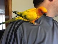 I have 1 handsome sun conure, he is 3 years of ages and